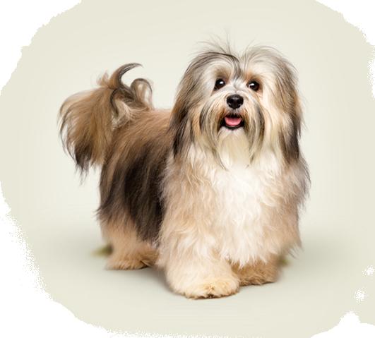 produtos specialdog