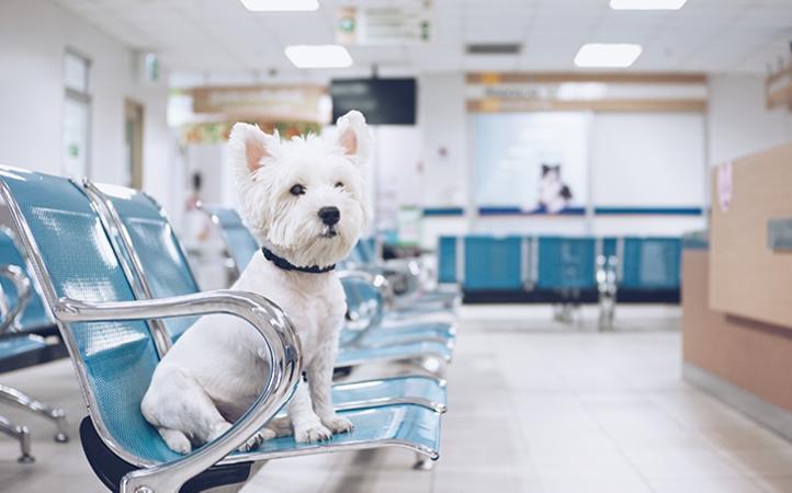 10 dicas para agregar valor ao atendimento veterinário.