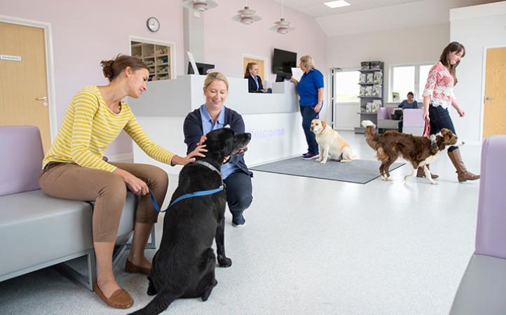 5 dicas para reter clientes em sua clínica veterinária.