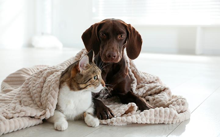 cuidados-com-os-pets-no-inverno