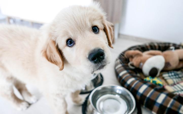 A importância do DHA no alimento do seu filhote.