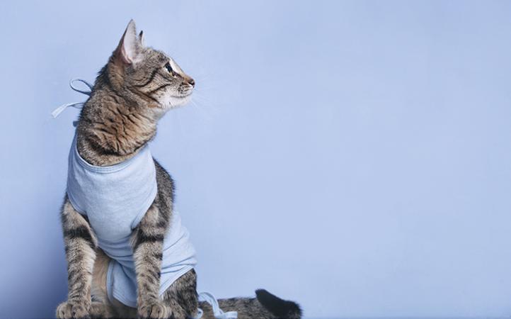 conheca-os-beneficios-da-castracao-para-caes-e-gatos-