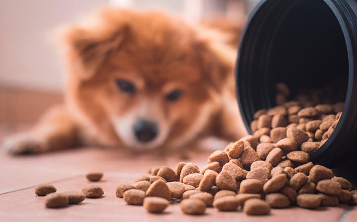 Como armazenar corretamente o alimento do seu pet