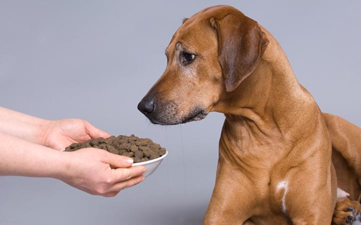 Conheça os cuidados na nutrição de animais seniores