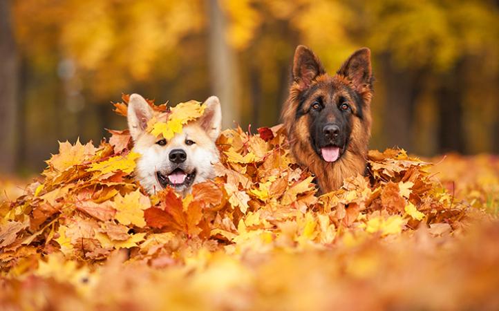cuidados-com-os-pets-no-outono-