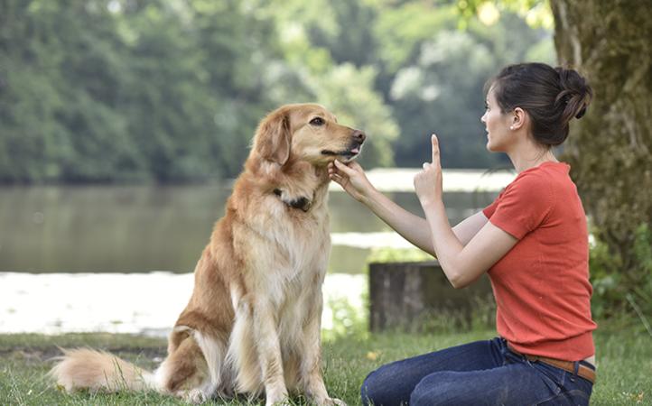 dicas-de-adestramento-para-praticar-com-seu-cao
