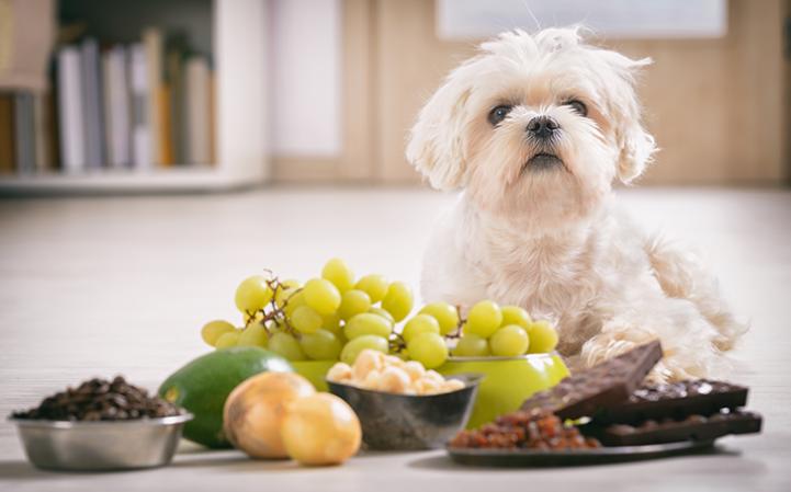 fique-atento-5-alimentos-comuns-que-sao-altamente-toxicos-para-caes-e-gatos-