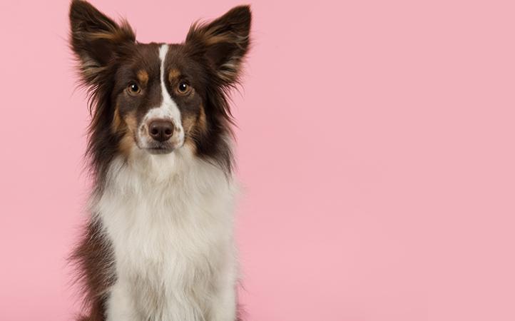 Outubro Rosa Pet - Tumor de mama em cães e gatos.