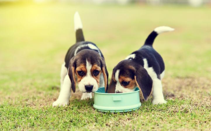 Transição do leite para os alimentos sólidos: quais cuidados tomar com os filhotes?