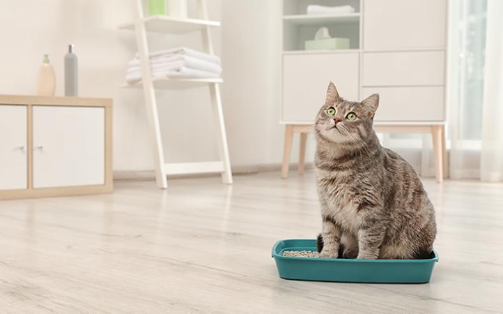 O que você precisa saber sobre urolitíases e pH urinário em felinos.